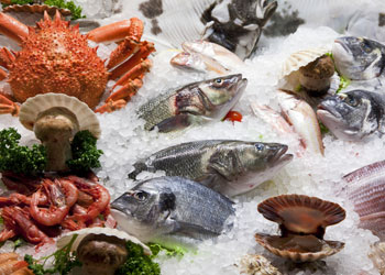 Different types of fresh fish and seafood on ice with parsley
