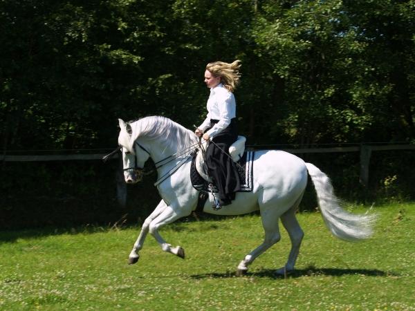 gallop on a spaniard