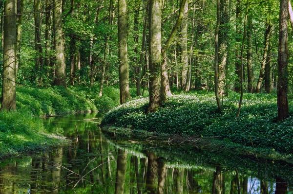 auenwald at jechtingen kaiserstuhl