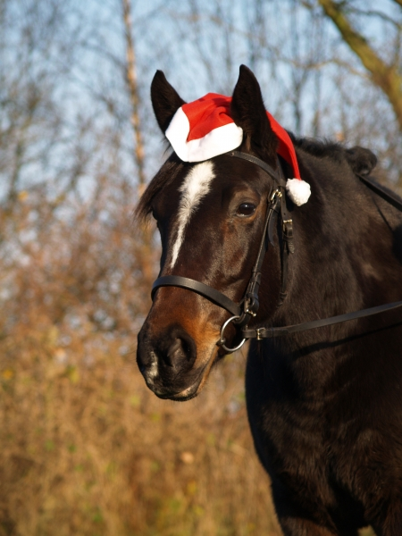 traber mare in a christmas look