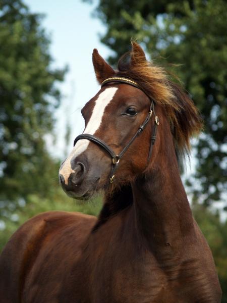 pony in portrait
