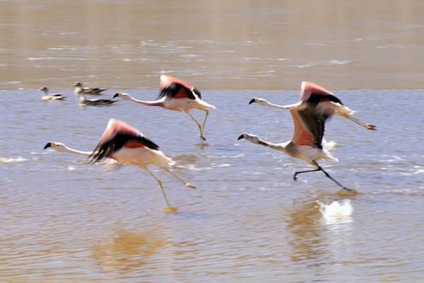 flamingos put on the next flight