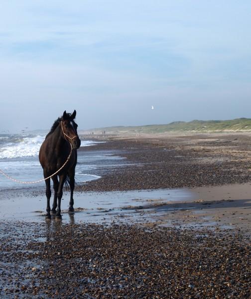 walk, on, the, beach - 2550629