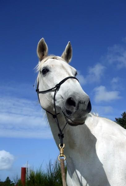 horsemanship - 2561359