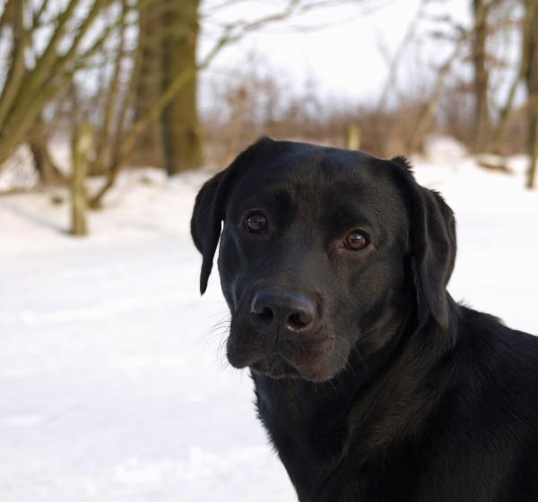 dog portrait in snow