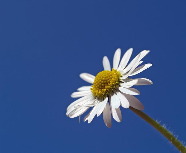 spring - 3064733