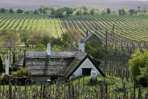 vineyards and farmhouse at lake balaton