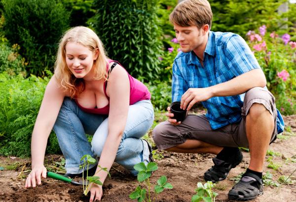gardening planting strawberries