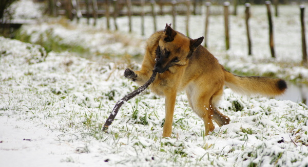 jule in snow