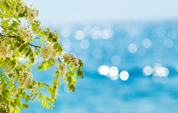 abstract spring or summer backgrounds with