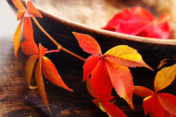 changing colours of autumn