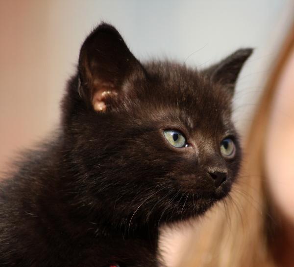 black cat puppy in close up
