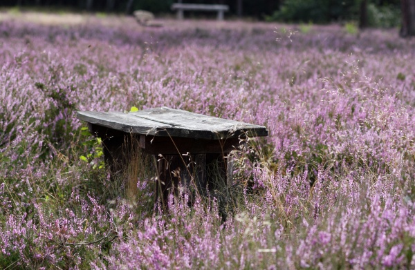wooden benches in the heath