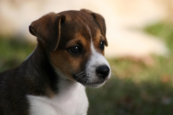 puppy in close up