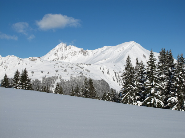 mountains and trees in the bernese