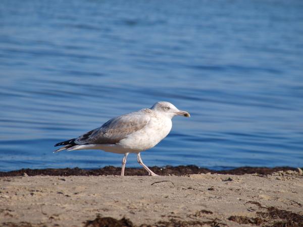 beach, seaside, the beach, seashore, water, north sea - 9562968