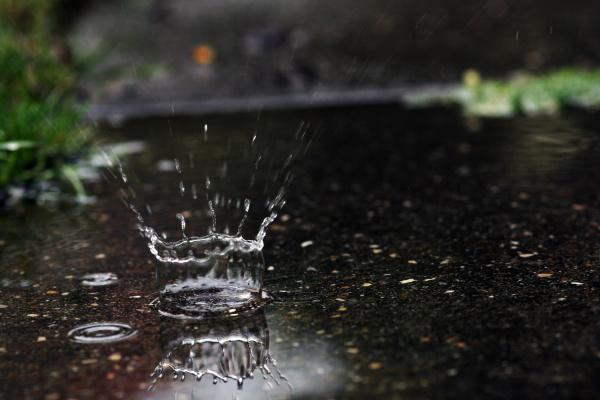 the large raindrops