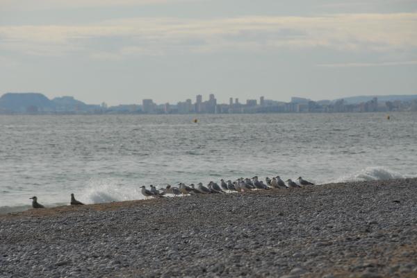 gulls cormorants