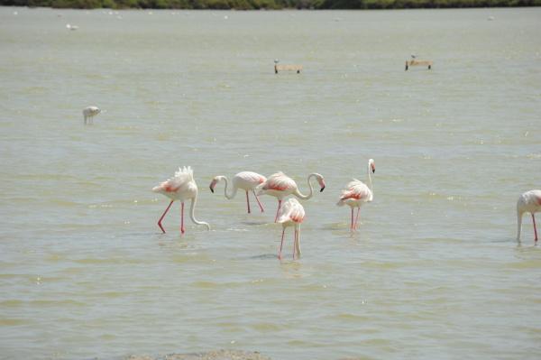 spain flamingos