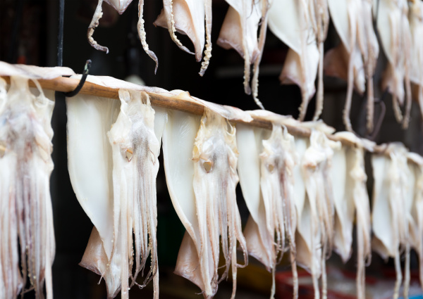 hanging squid for dehydration