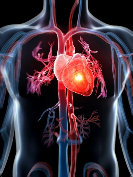 3d rendered illustration heart