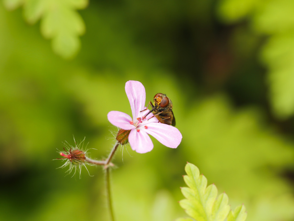 snout floating fly