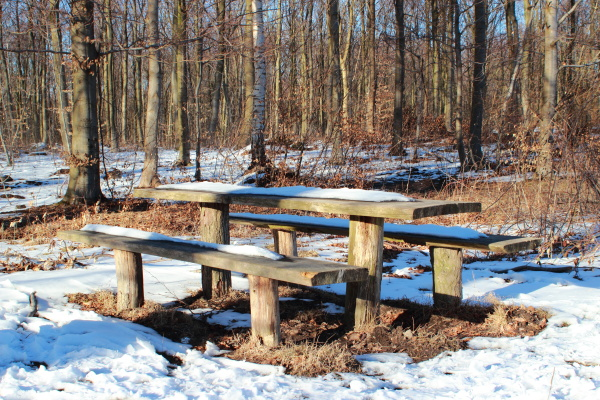 wooden forest table in winter with
