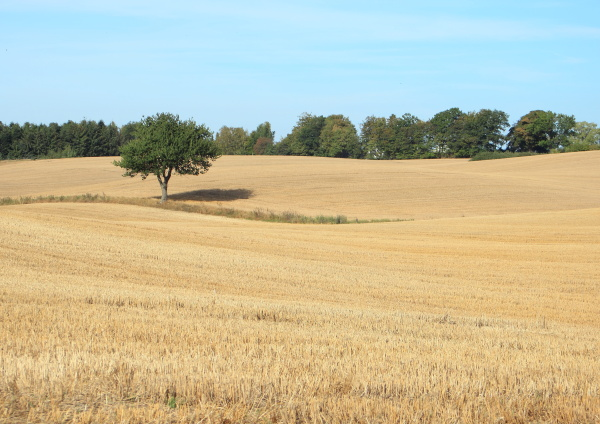 view of harvested wheat field with