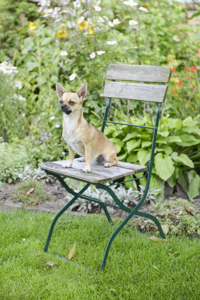 chihuahua garden chair folding chair sitting