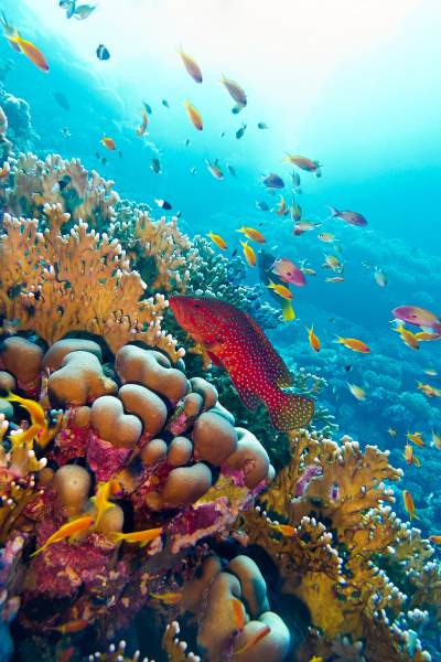 coral reef with red exotic fish