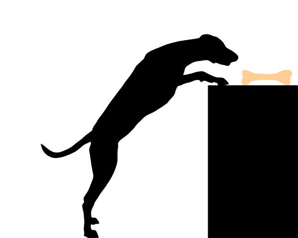 dog steals bones