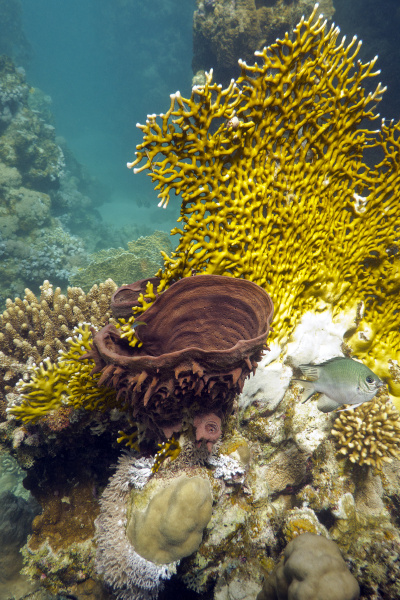 coral reef with fire coral and