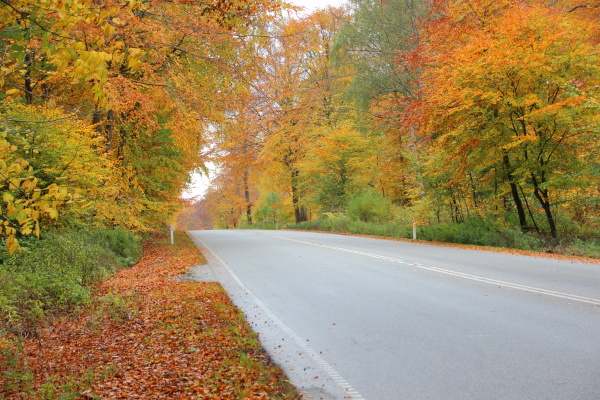 empty road in autumn forest with