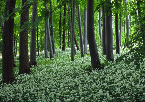 nature spring forest deciduous forest forest