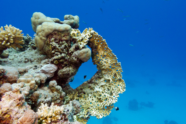coral reef with yellow fire coral