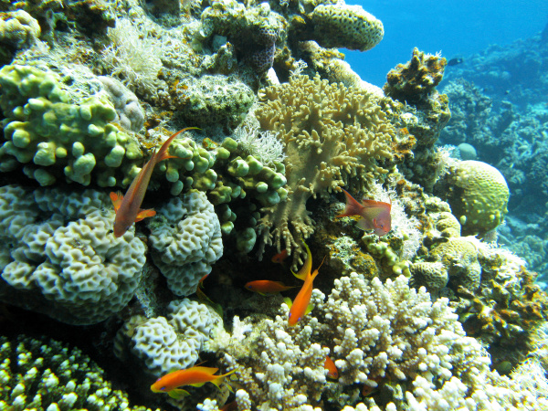 coral reef with hard coral at