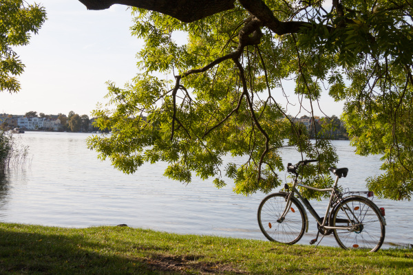 bicycle under tree by the lake