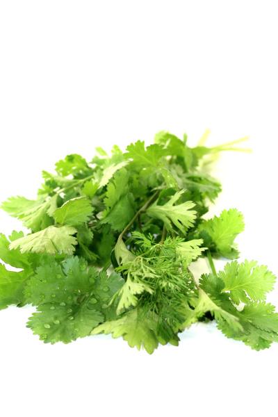 fresh green waistband coriander