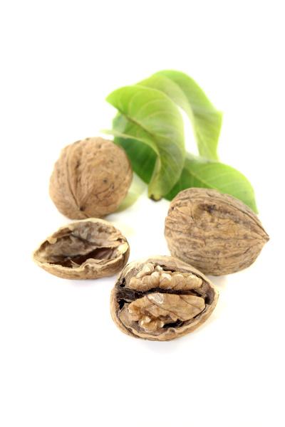walnuts with walnut leaves