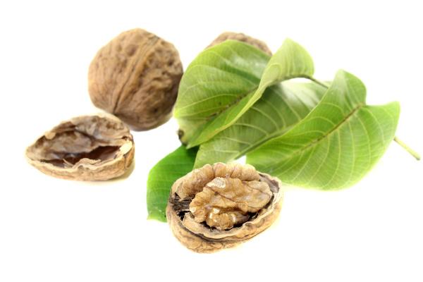 crisp walnuts with walnut leaves