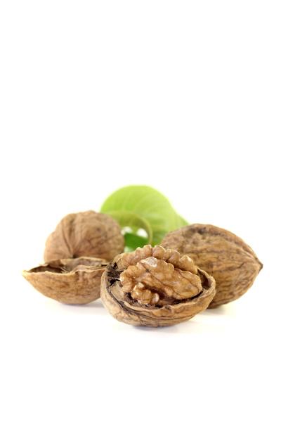 fresh walnuts with walnut leaves