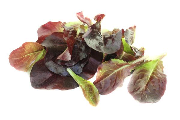 fresh red salad