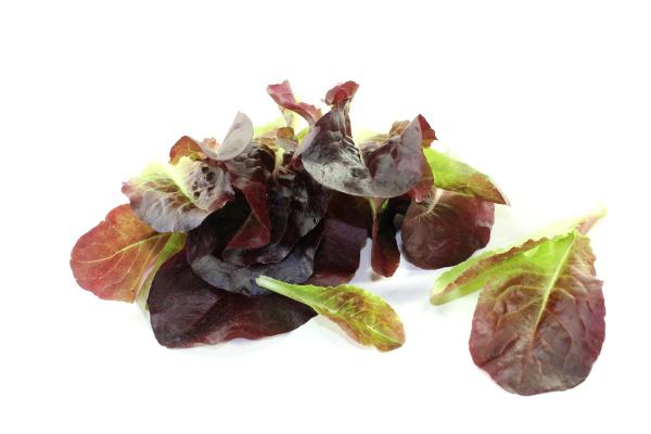fresh crisp red salad