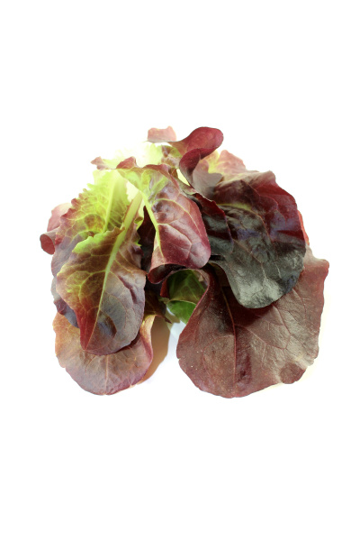 delicious crisp red salad