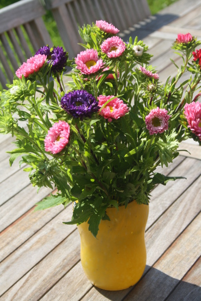 autumn asterisks in yellow vase on