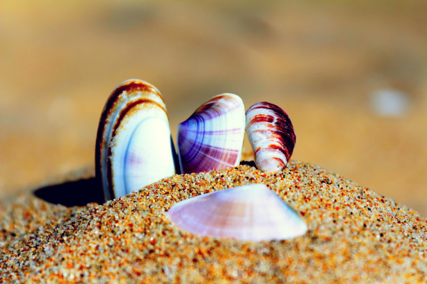 seashells in the sand on the