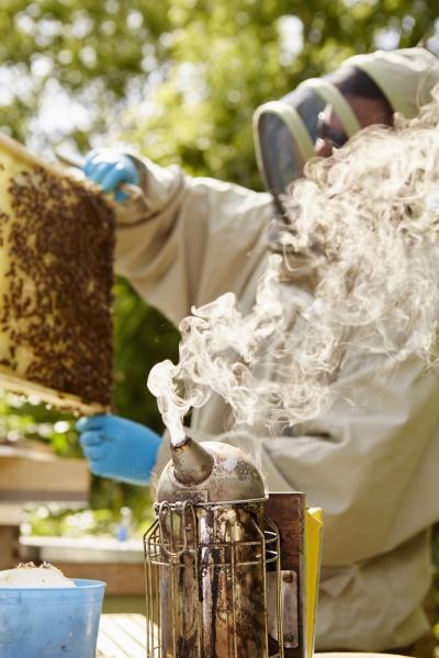 a beekeeper in a beekeeping suit