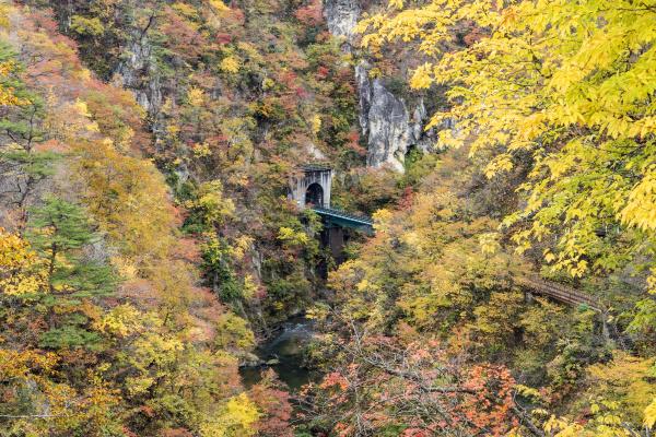the, naruko, gorge, autumn, leaves, in - 16319435