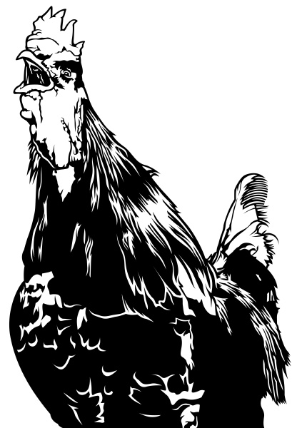 crowing, rooster - 16320679