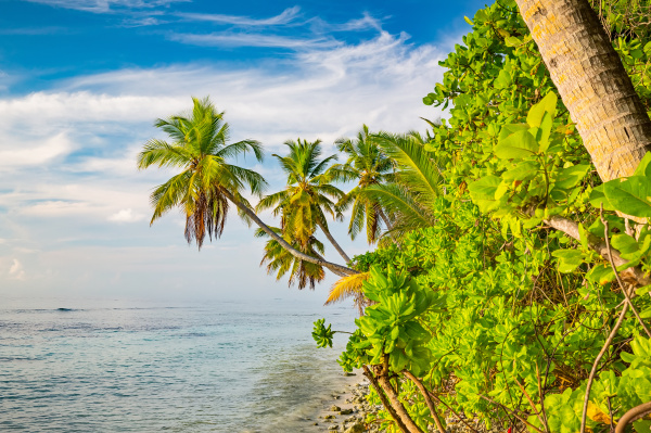 palm, trees, on, maldivian, beach - 16344711